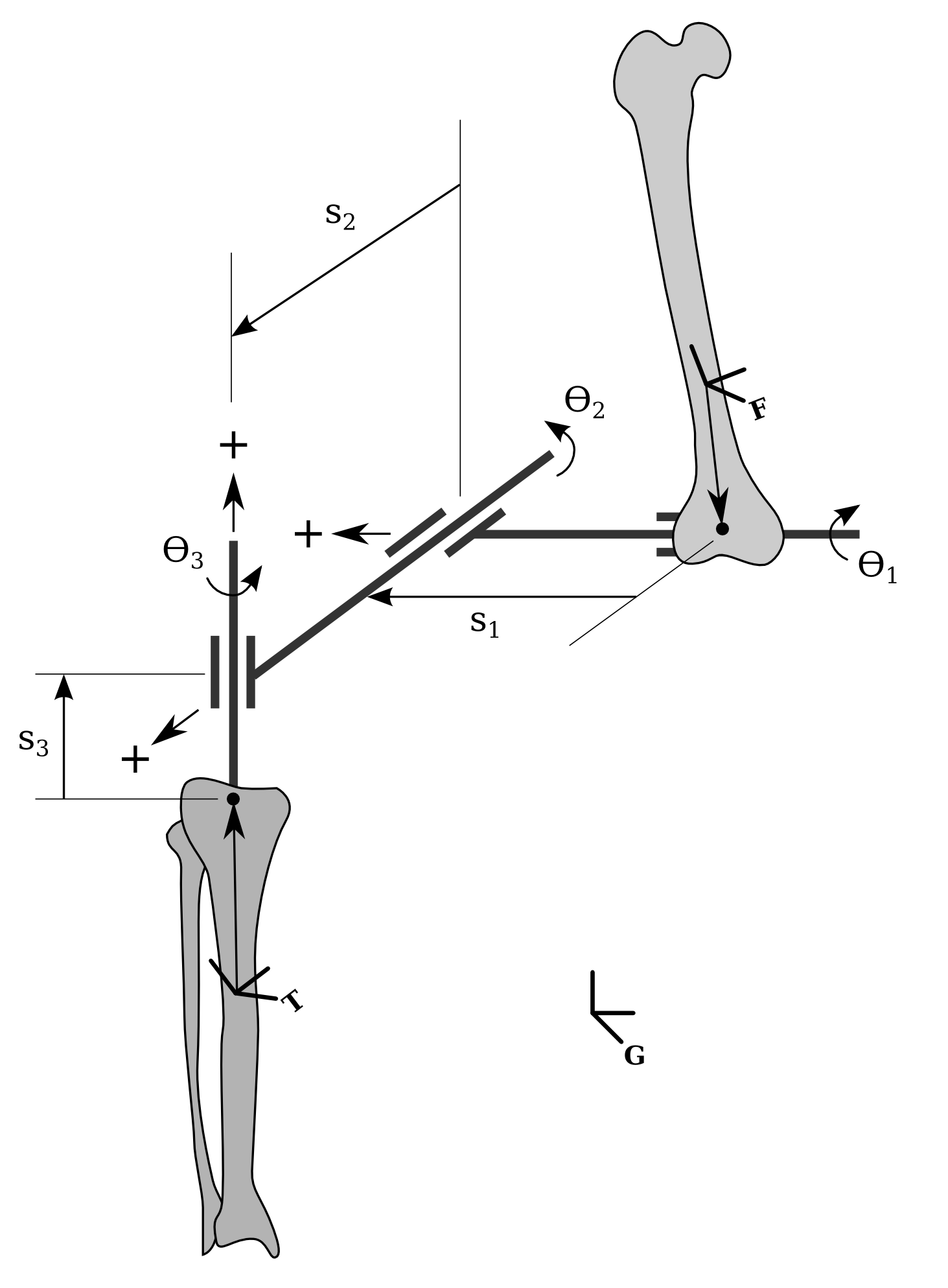 Open Knee(s) local and joint coordinate systems